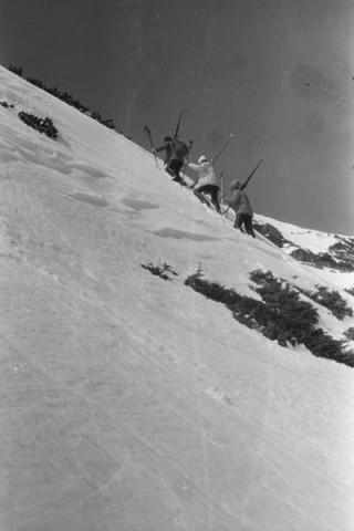 Imagini de colecție